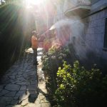 Disinfestazione zanzare Roma