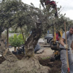 impresa di giardinaggio roma