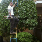 potatura piante roma