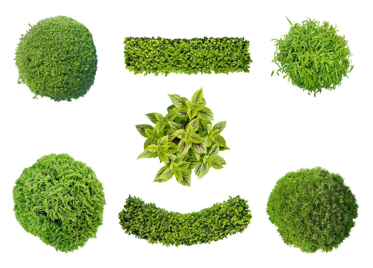 Piante Da Siepi Immagini quali sono le piante da siepe sempreverdi? | italservizi