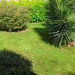 giardinaggio roma